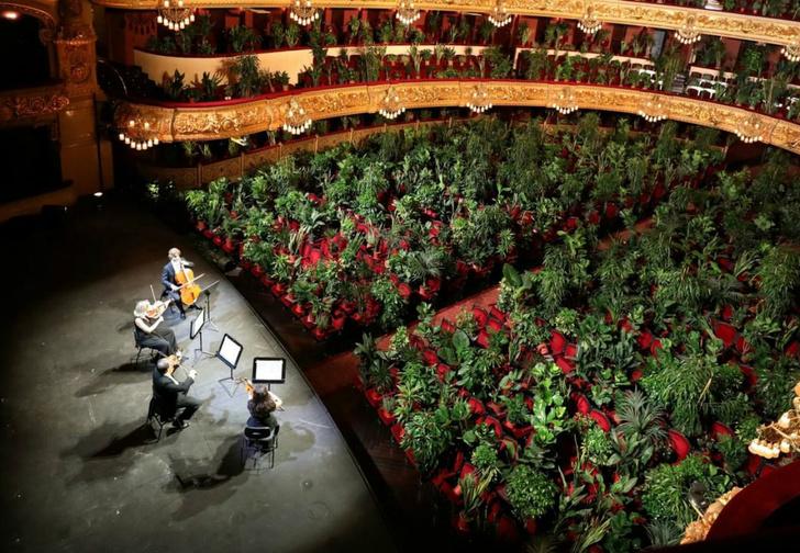Фото №1 - Странное видео: струнный квартет дает концерт для полного зала растений в горшках (видео)