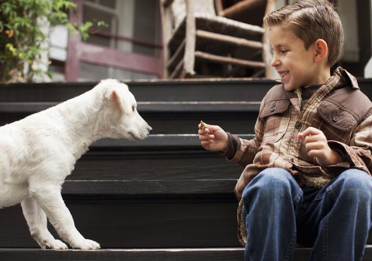 ребенок просит завести собаку или кошку