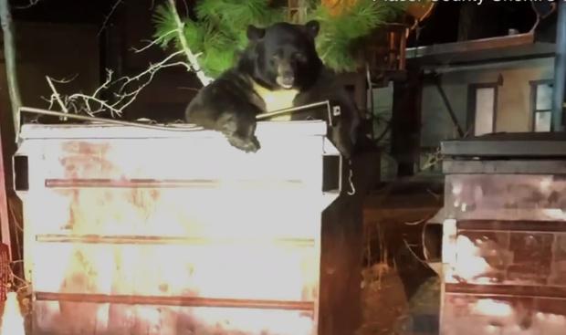Фото №1 - Медведь застрял в мусорном баке и позвал на помощь полицейских (видео)