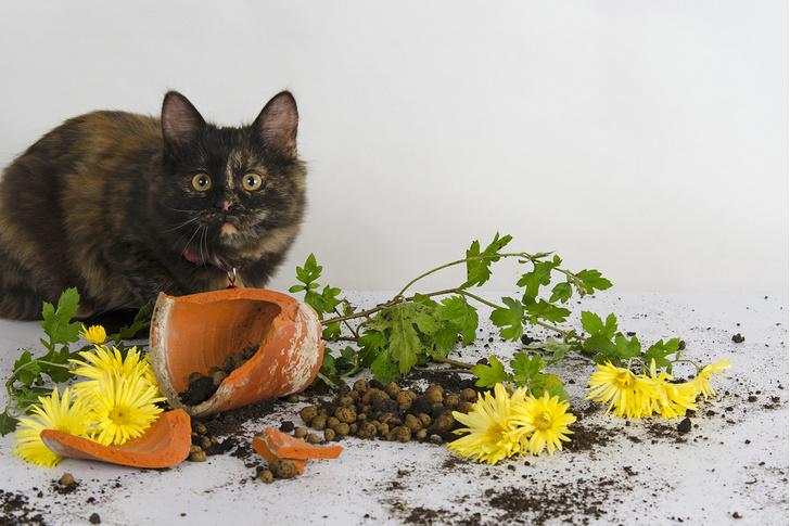 Фото №9 - 9 популярных цветов, которые смертельно опасны для котов