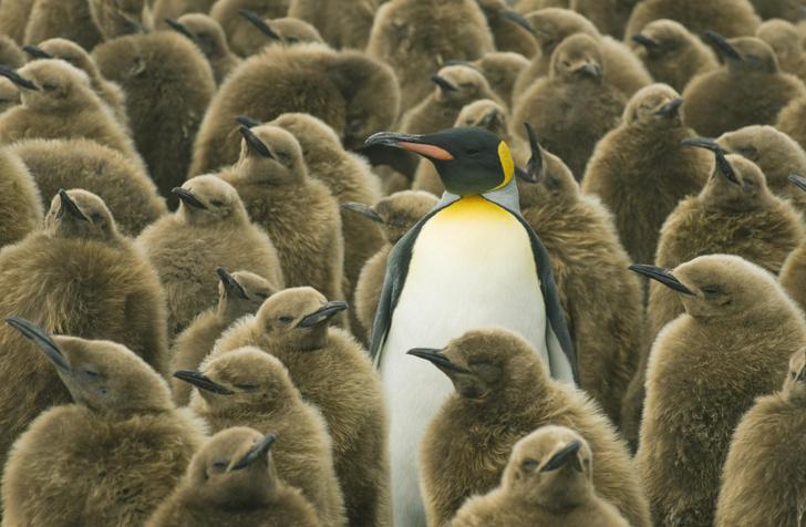 Фото №1 - Ученые всерьез задумались, что пингвины могут быть инопланетянами