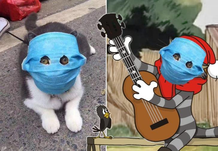 Фото №1 - Китайский кот в маске от коронавируса стал героем фотожаб