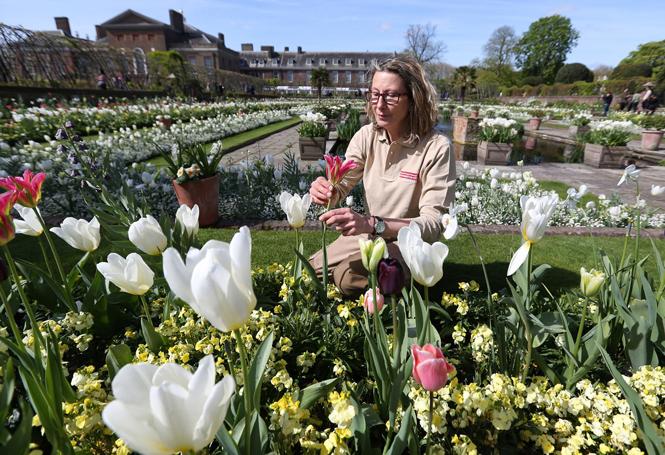 Фото №9 - Сад памяти Дианы: самая вдохновляющая причина попасть в Лондон
