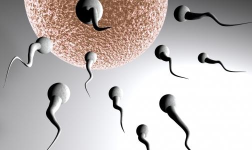 Фото №1 - Ученые создали искусственную сперму