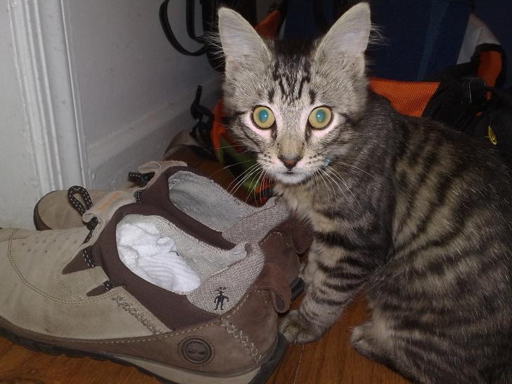 Фото №1 - Лайфхак: как избавить вещи от кошачьего запаха