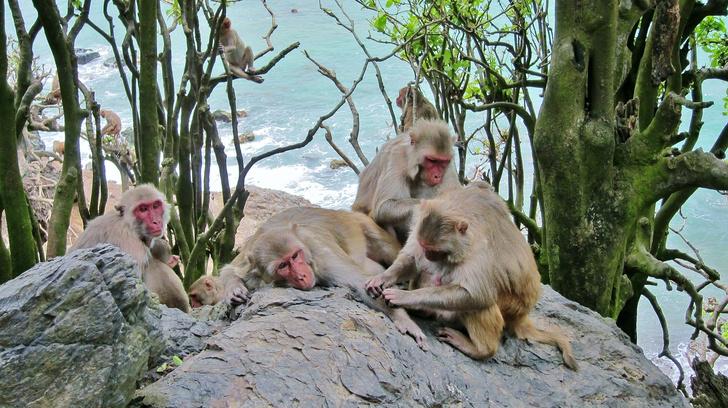 Фото №1 - Названы преимущества женской дружбы у приматов