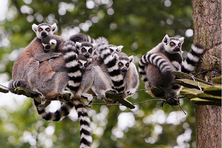 Фото №6 - Зоология: гламурная семейка