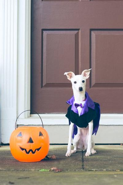 Фото №10 - Фотоподборка недели: собаки, которые уже готовы к Хэллоуину
