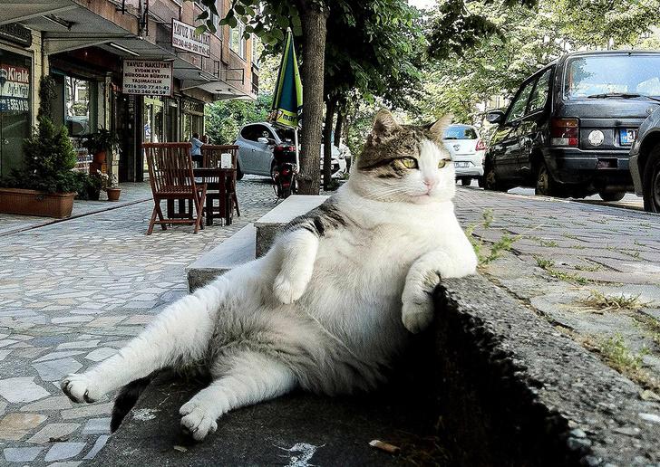 Фото №2 - В Стамбуле установили памятник коту-мему