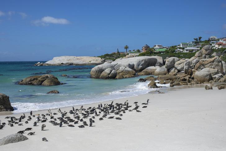 Фото №3 - Повелители Антарктики и не только: 7 мест на планете, где можно встретить пингвинов