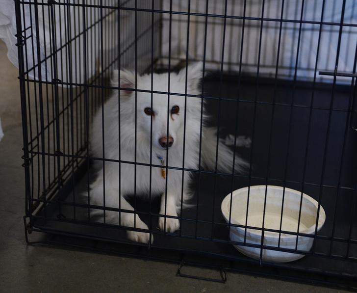 Фото №1 - Можно ли определить породу бездомной собаки по внешности