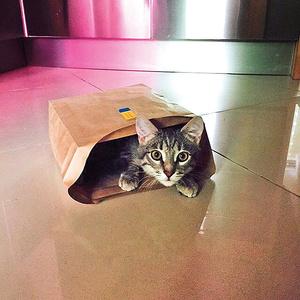 Фото №15 - Кто сказал «мяу»: Варум, Чиповская, Свиридова о любимых кошках