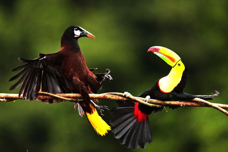 Фото №1 - Один кадр: Коста-Рика