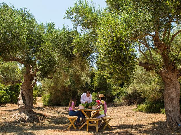 Фото №2 - Секреты выбора и хранения оливкового масла от греческих экспертов