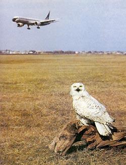 Фото №3 - Фанаты белой совы