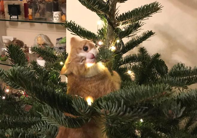 Фото №1 - Коты и собаки против новогодних ёлок (16 фотографий)