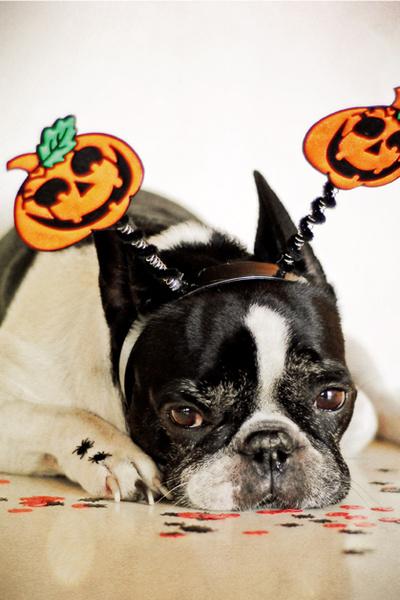 Фото №1 - Фотоподборка недели: собаки, которые уже готовы к Хэллоуину
