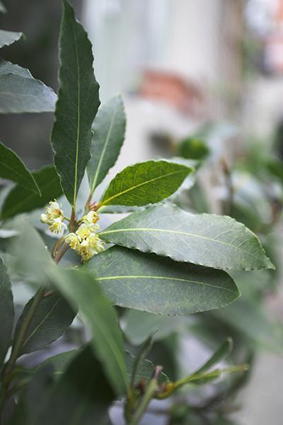 Фото №9 - Зарядись! 10 растений, которые улучшают самочувствие