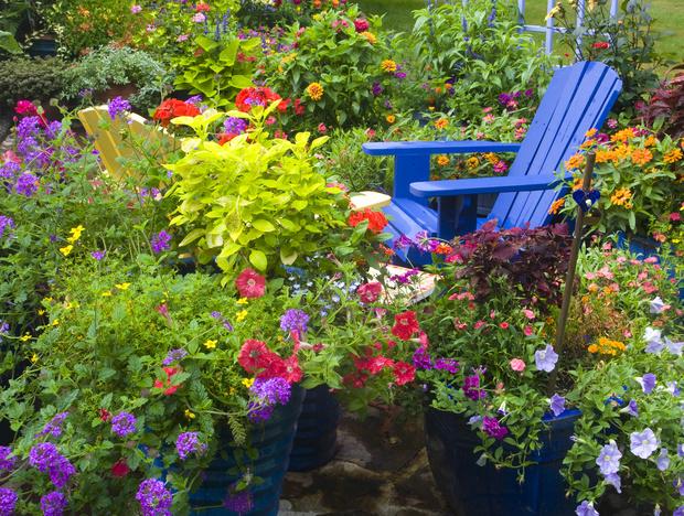 Фото №1 - Клумба: видеть во сне; к чему видеть во сне клумбу с цветами