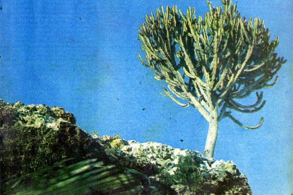 Фото №1 - Могикане Восточной Африки