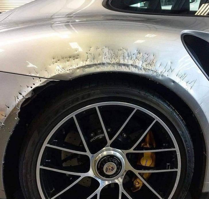 Фото №1 - Собака лауреата «Грэмми» изуродовала его Porsche ценой $250 000