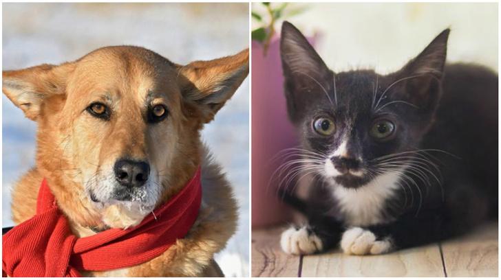 Фото №1 - Котопёс недели: собака Феня и кошка Анита хотят стать домашними