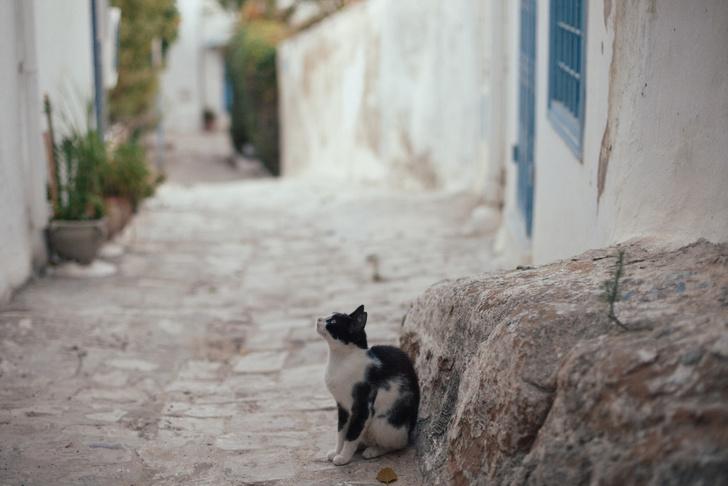 Фото №5 - Жемчужина Туниса: зачем ехать в бело-голубой город Сиди-бу-Саид