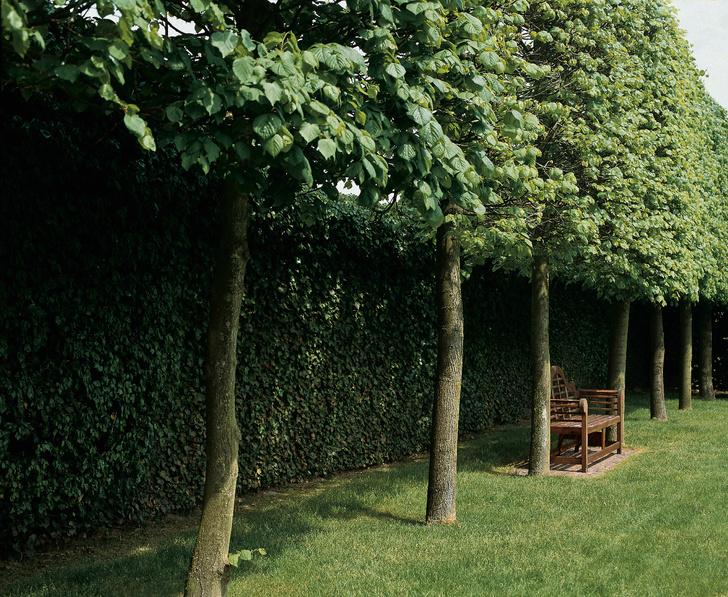 Фото №5 - ТОП-5 вопросов читателей на тему сада