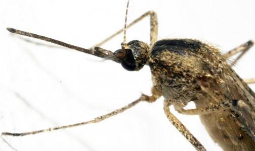 Фото №1 - Запах грязных носков победит малярию в Африке