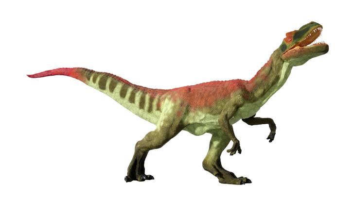 Фото №1 - Гигантские аллозавры, несмотря на свои размеры, питались падалью