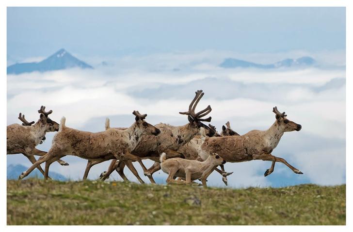 Фото №1 - ВОКРУГ СВЕТА - партнёр фотовыставки «Лесные истории»