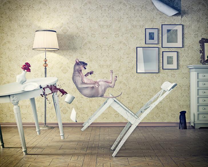 Фото №3 - Домашние повадки: 9 привычек питомцев, которые ставят нас в тупик