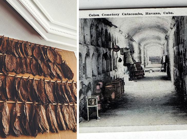 Фото №5 - Аромат дня: Evasion Digo de Havane от L'Arc