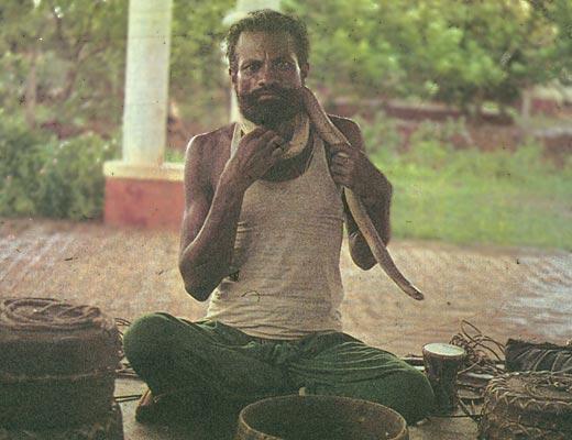 Фото №1 - Басту — домашняя змея