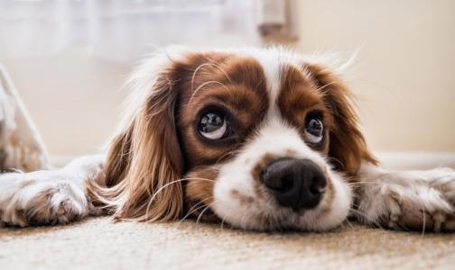 Фото №1 - Ученые: Собаки защищают одиноких хозяев от преждевременной смерти