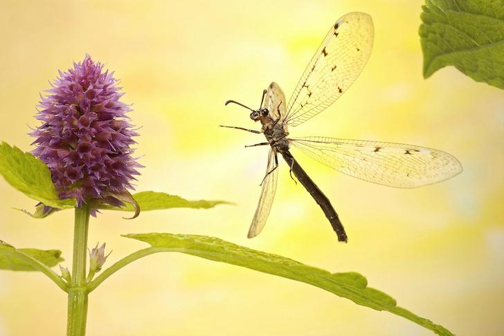 Фото №1 - Зачем насекомые научились «притворяться мертвыми»