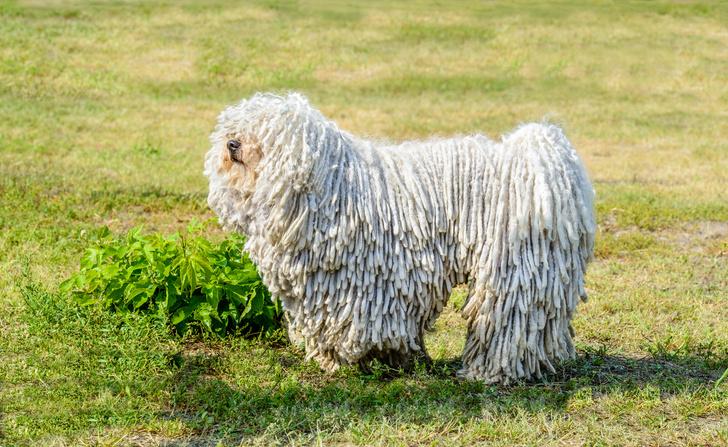 Фото №4 - 15 пород собак, которые не линяют