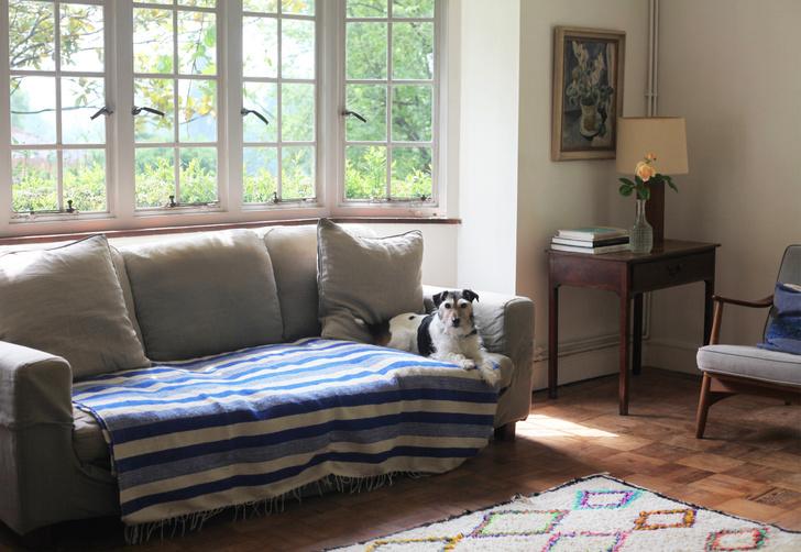 Джексон, смесь джека-рассела и бордер-терьера, лежит на диване, Habitat.