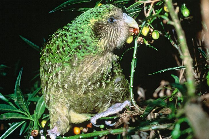 Фото №3 - На грани вымирания: 5 самых редких животных планеты