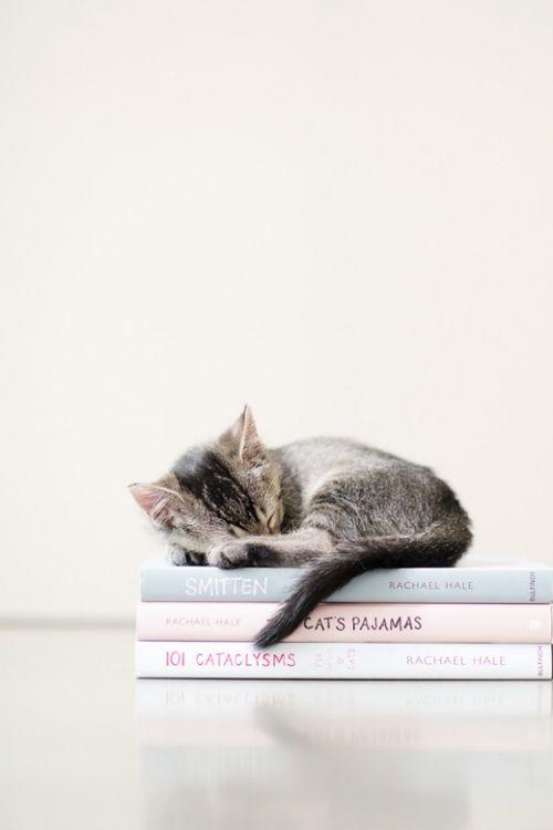 Фото №3 - Как наладить режим сна, если вы чертовски устали