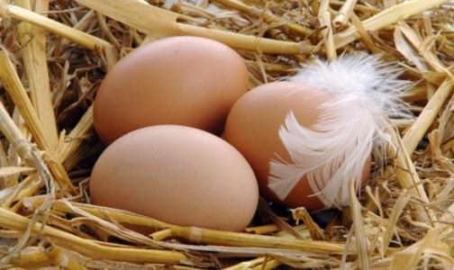 Фото №1 - Онищенко разрешил есть яйца