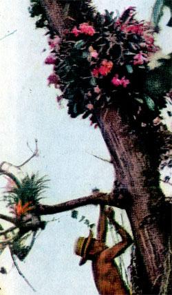 Фото №2 - Итак, что есть орхидея?