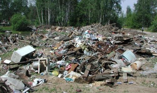 Фото №1 - В Петербурге обнаружили новые несанкционированные свалки
