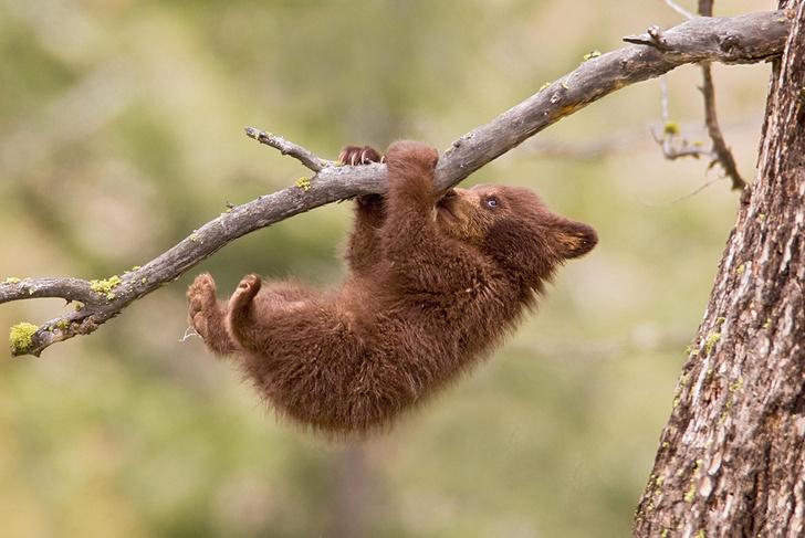 Фото №1 - Мишка на дереве