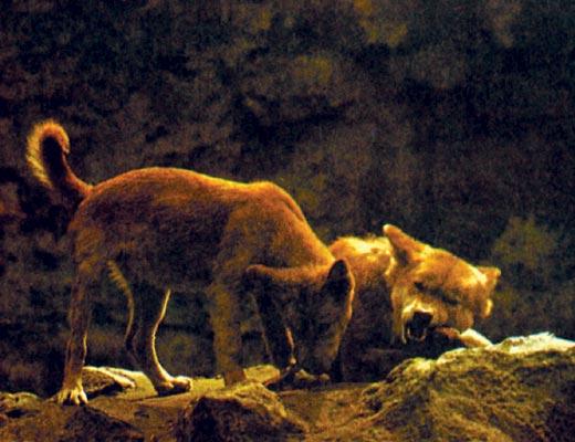 Фото №1 - Вероломные охотники