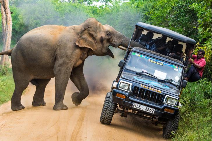 Фото №1 - Один кадр: Шри-Ланка
