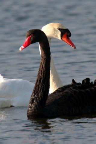 Фото №13 - Звериная страсть: на каких животных похожи звездные пары