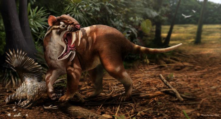 Фото №1 - Не все саблезубые тигры были хищниками
