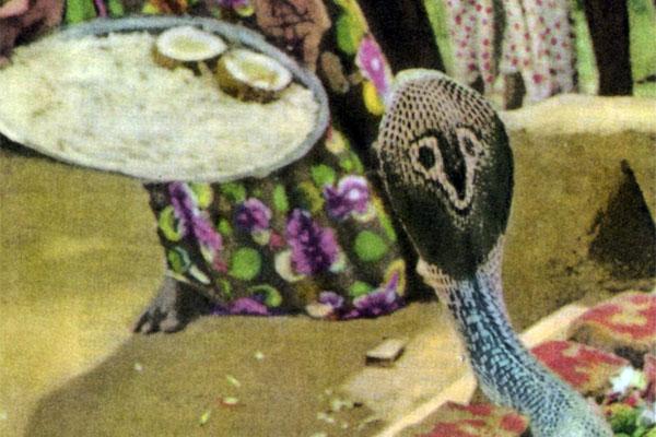 Фото №1 - Нага-панчами в Ширале