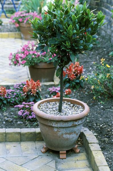 Фото №1 - 20 растений, которые отпугивают вредителей с грядок